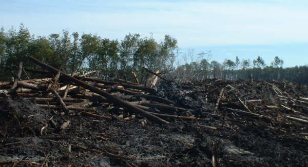 Clearcutting of coastal native hardwood forests in North Carolina – Drax is burning pellets from native forest logging in this region. Photo: Dogwood Alliance.